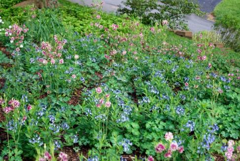 Early spring perennials.